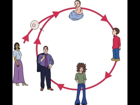 Human life cycle clipart clipart library library Humans Life Cycle Video for Kids - Science for Kids - YouTube clipart library library