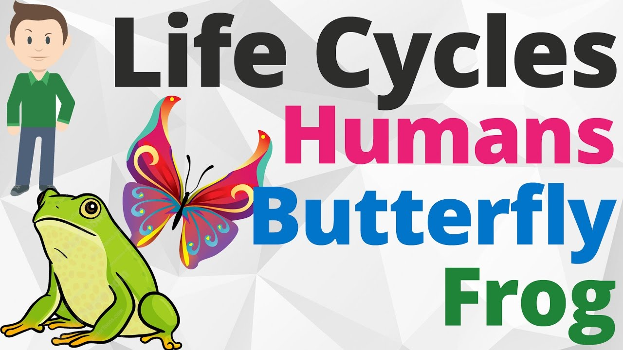Human life cycle clipart clipart free library Life Cycle Songs for Kids | Humans Life Cycle | Life Cycle of a ... clipart free library