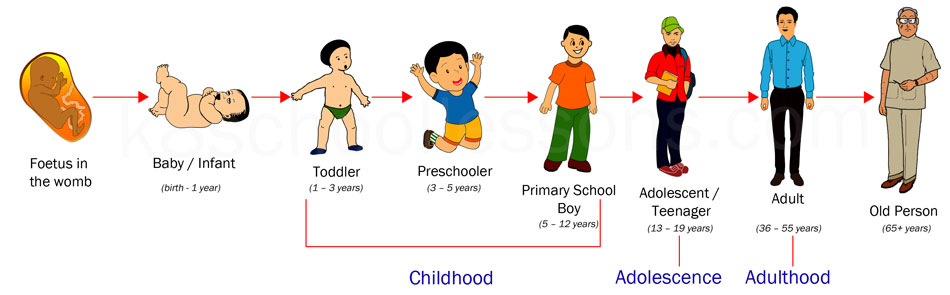 Human life cycle clipart picture freeuse stock Human Life Cycle | Stages of Human Life Cycle | Science for Kids picture freeuse stock