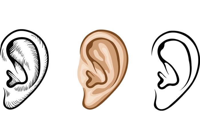 Humanears clipart download Human Ear Vectors - Download Free Vectors, Clipart Graphics & Vector Art download