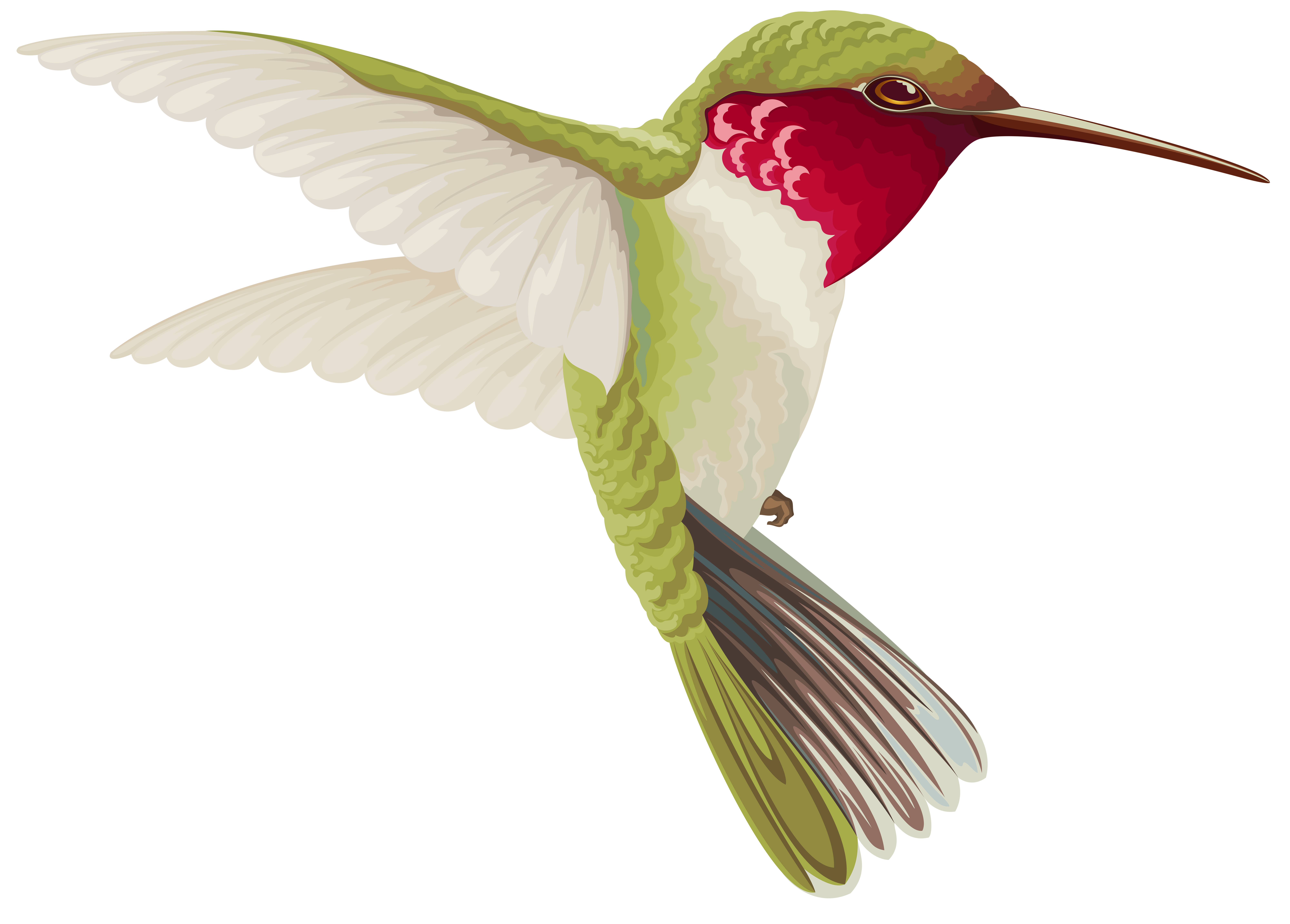 Humming Bird Transparent Clip Art Image | Gallery Yopriceville ... clip royalty free library