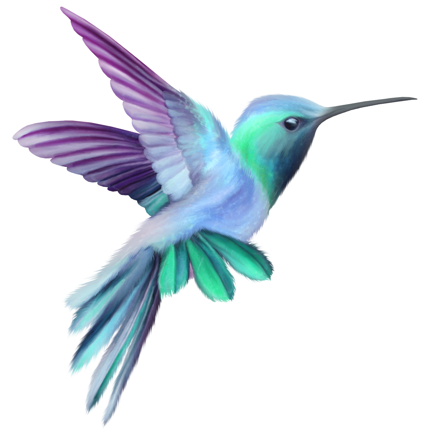 Hummingbird Transparent Clip Art Image | Gallery Yopriceville ... banner transparent library