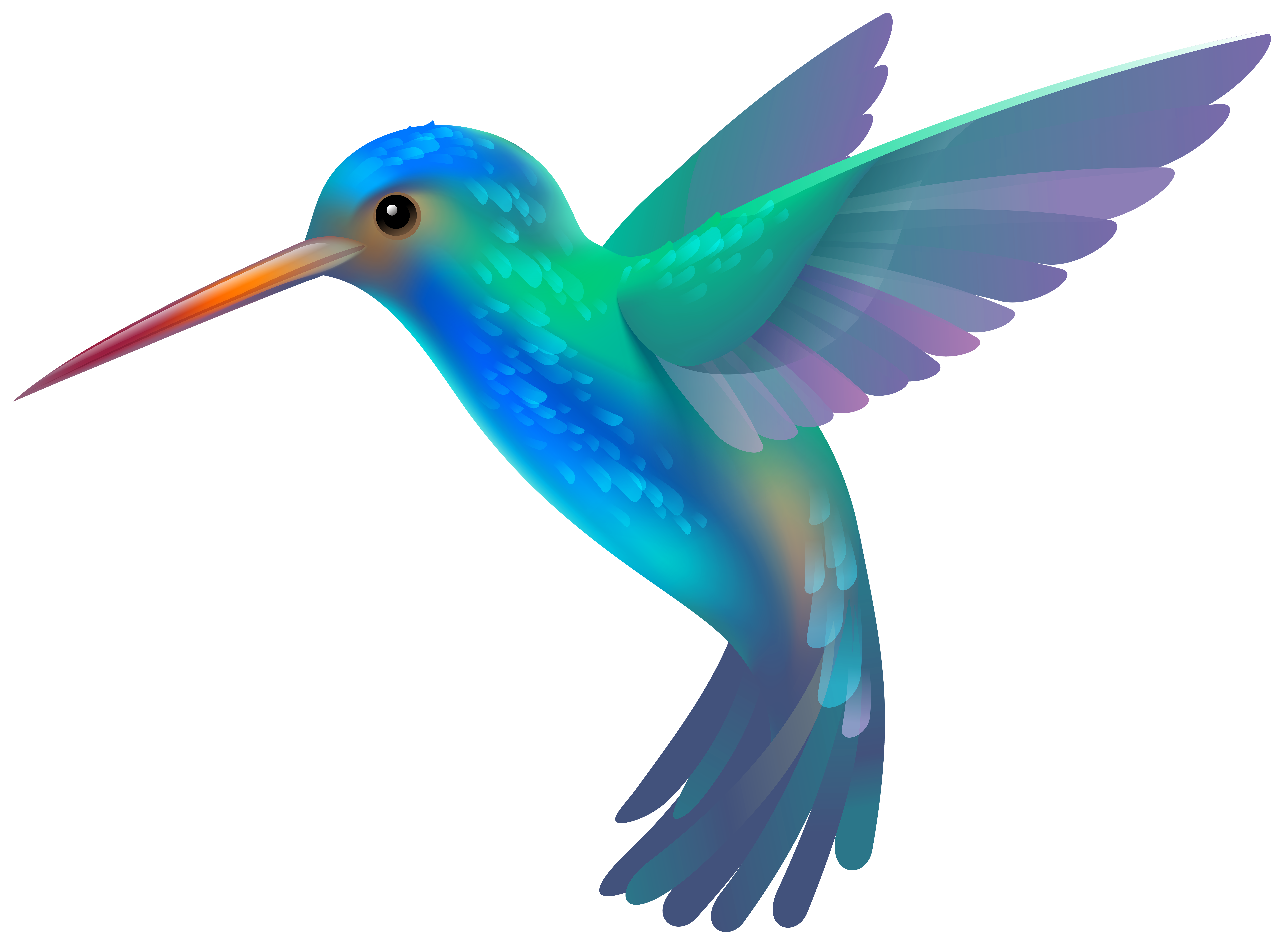 Hummingbird Clipart Picture multi colored | Birds of a Feather ... picture free download