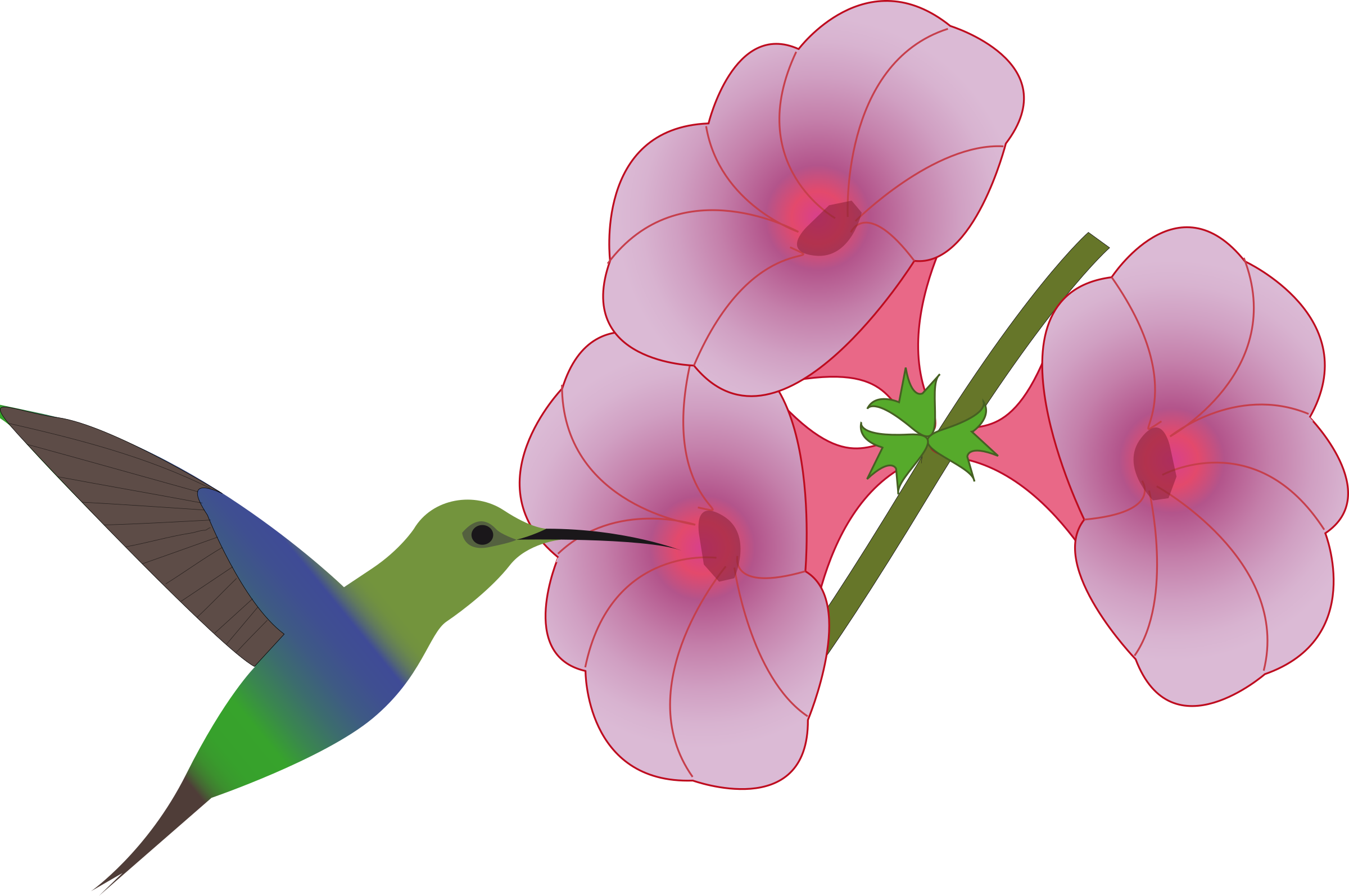 Hummingbird and flower clipart freeuse library Clipart - pretty hummingbird freeuse library