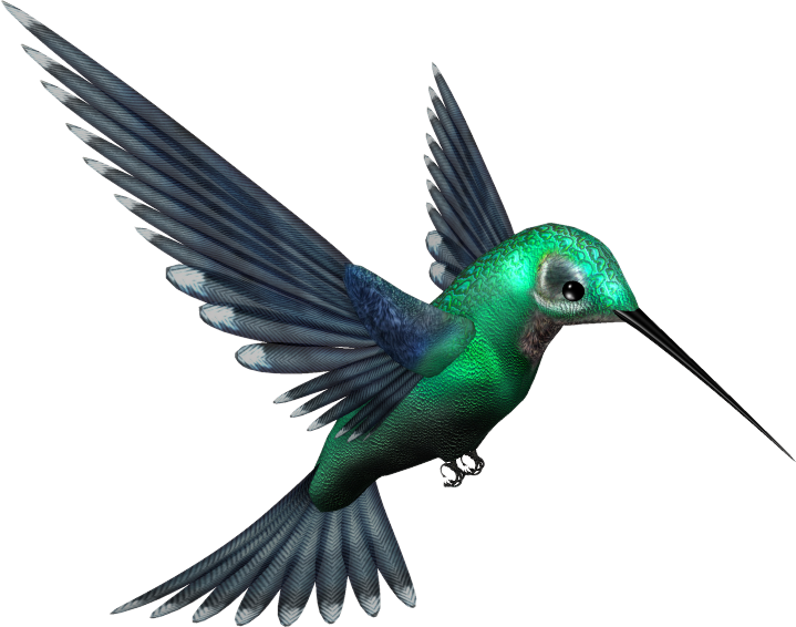 Hummingbird and flower clipart image black and white Hummingbird PNG Transparent Images | PNG All image black and white