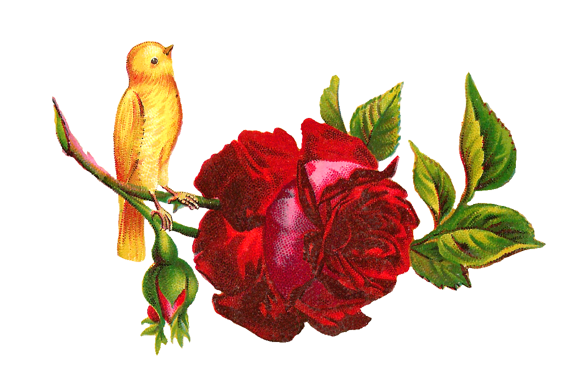 Hummingbird and flower clipart graphic transparent download Hummingbird Rose Flower Clip art - yellow rose 1168*748 transprent ... graphic transparent download