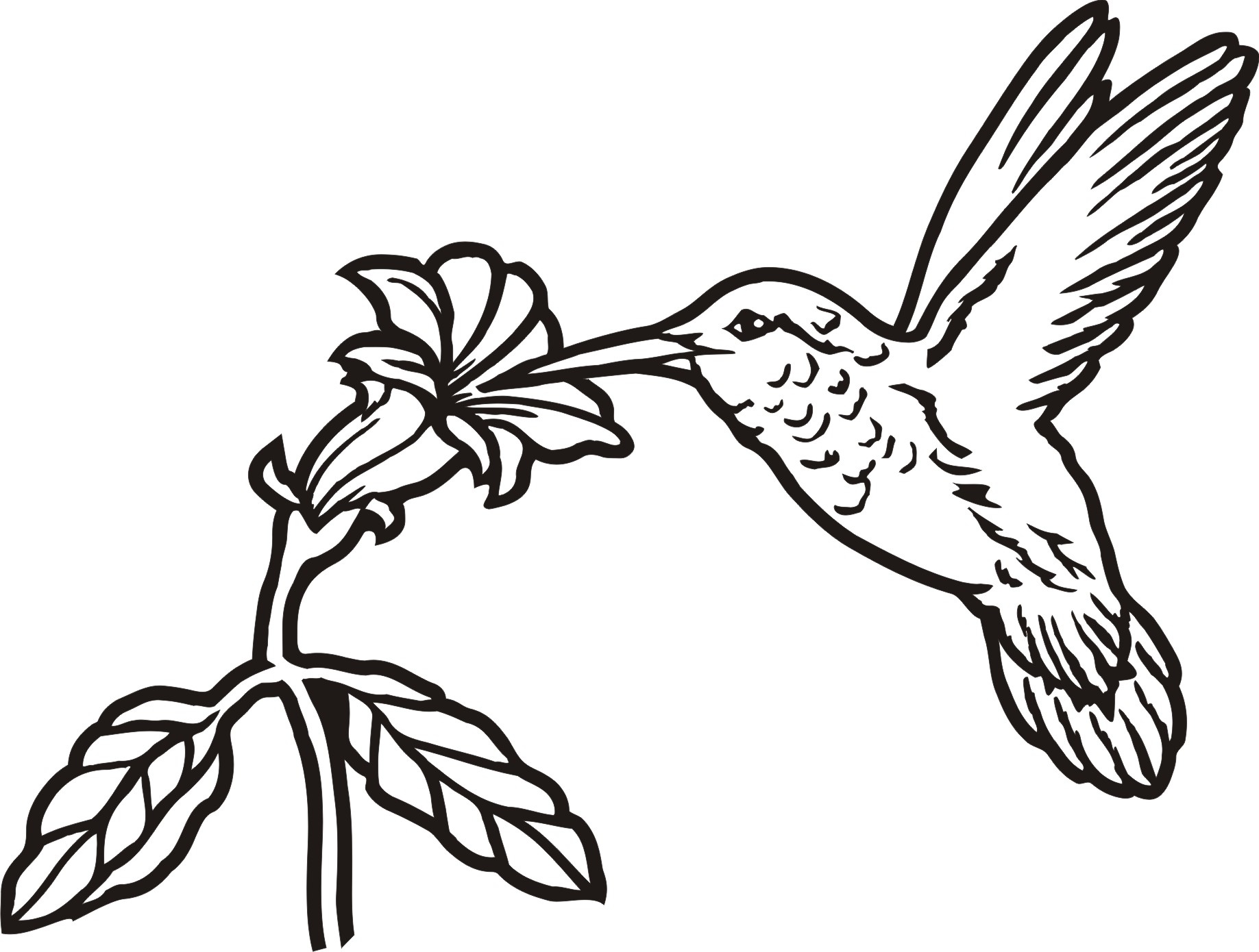 Hummingbird with flower clipart image black and white download Hummingbird Line Art | Free download best Hummingbird Line Art on ... image black and white download