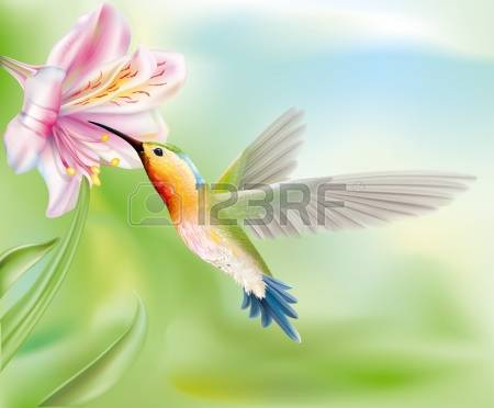 Hummingbirds and flowers clipart transparent stock 1,355 Hummingbird Flower Stock Vector Illustration And Royalty ... transparent stock