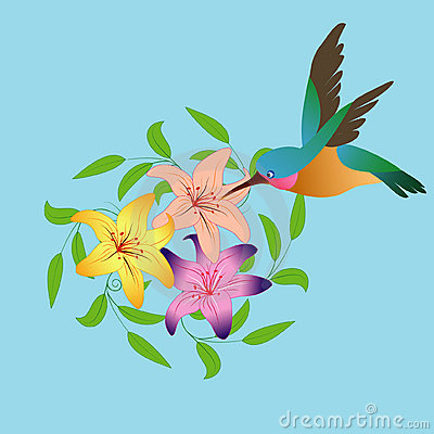 Hummingbirds and flowers clipart png download Hummingbird And Flowers Stock Image - Image: 7908441 png download
