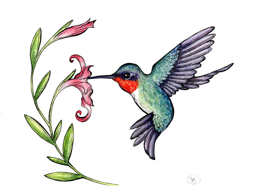 Hummingbirds and flowers clipart transparent library Hummingbird Clip Art & Hummingbird Clip Art Clip Art Images ... transparent library