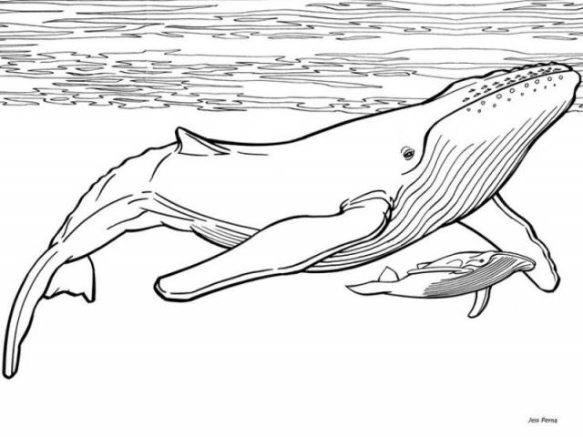 Humpback whale clipart black and white graphic royalty free library Free Humpback Whale Clipart, Download Free Clip Art on Owips.com graphic royalty free library