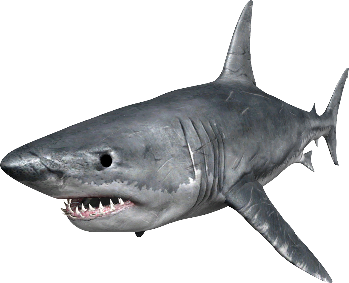 Hungry shark evolution clipart clip free stock Hungry Shark Evolution Great white shark Clip art - sharks png ... clip free stock
