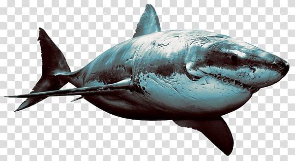 Hungry shark evolution clipart svg royalty free download Hungry Shark Evolution Great white shark Desktop Shark attack, shark ... svg royalty free download