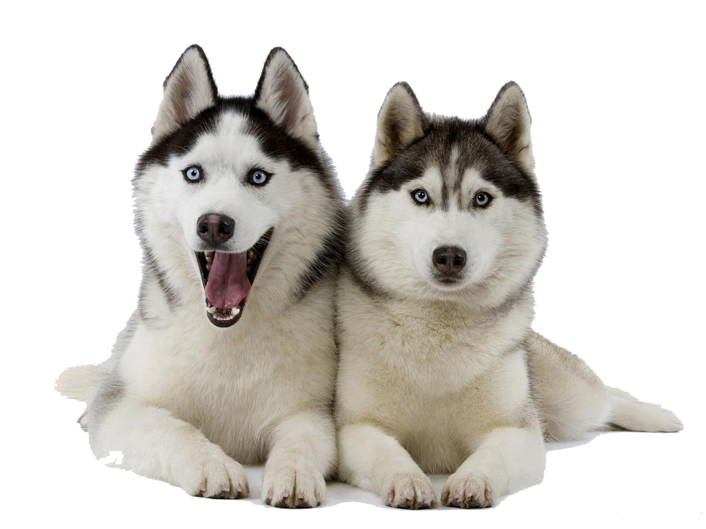 Husky PNG Clipart - peoplepng.com clipart black and white stock
