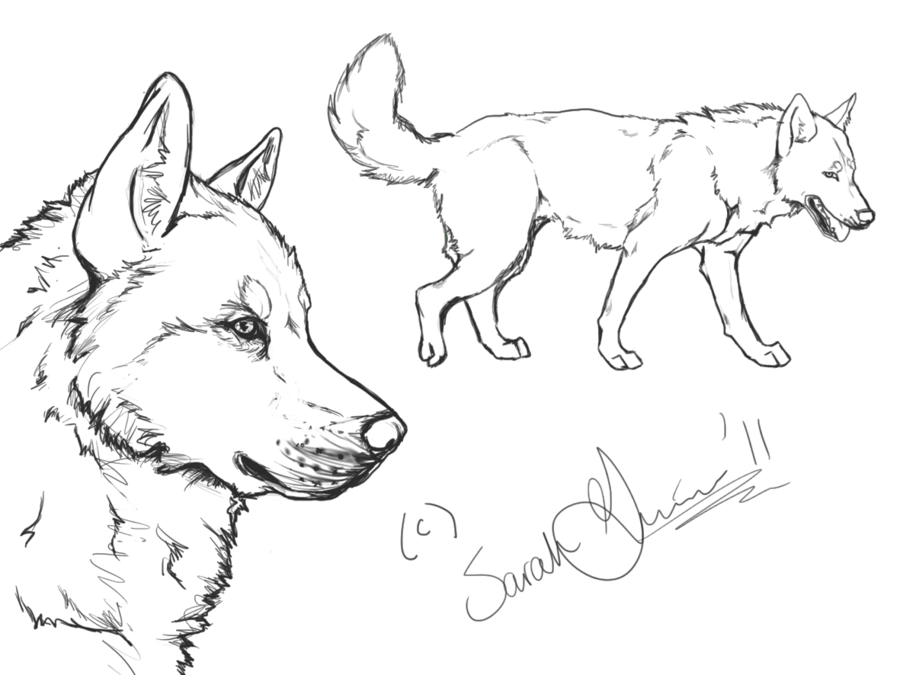 Husky dog clipart black and white vector royalty free Siberian Husky Drawing at GetDrawings.com | Free for personal use ... vector royalty free
