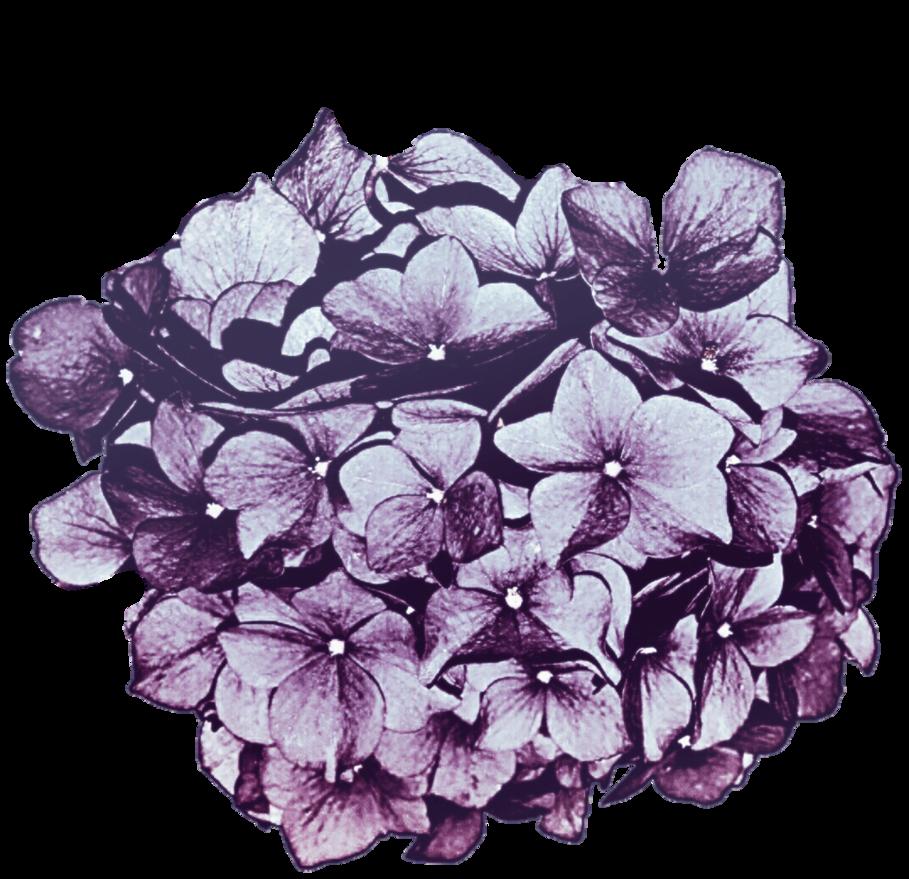 Hydrangea flower clipart jpg library library Lavender Purple Hydrangea by jeanicebartzen27 on DeviantArt jpg library library