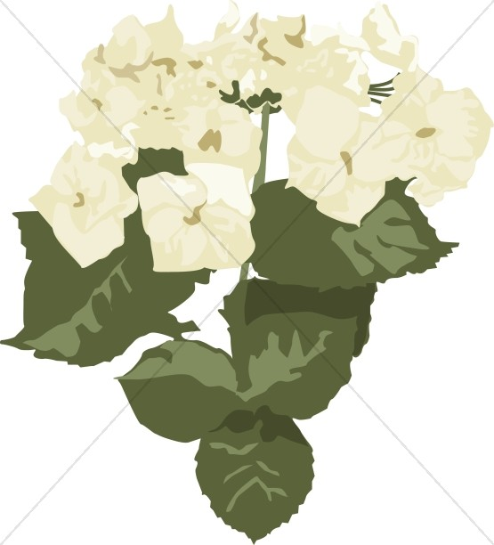 Hydrangea white clipart clipart library download White Hydrangea Altar Flowers | Church Bouquet Clipart clipart library download