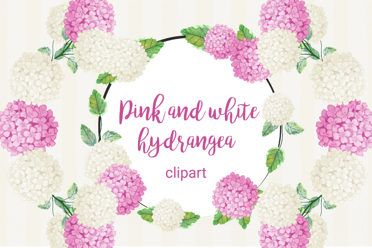 Hydrangea white clipart jpg transparent library Pink and white hydrangea Clipart jpg transparent library