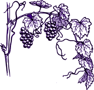 I am the vine clipart png Time: I AM the vine png