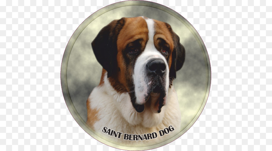 I miss you clipart with st bernard dog clipart royalty free library Dogs Cartoon png download - 500*500 - Free Transparent St ... clipart royalty free library