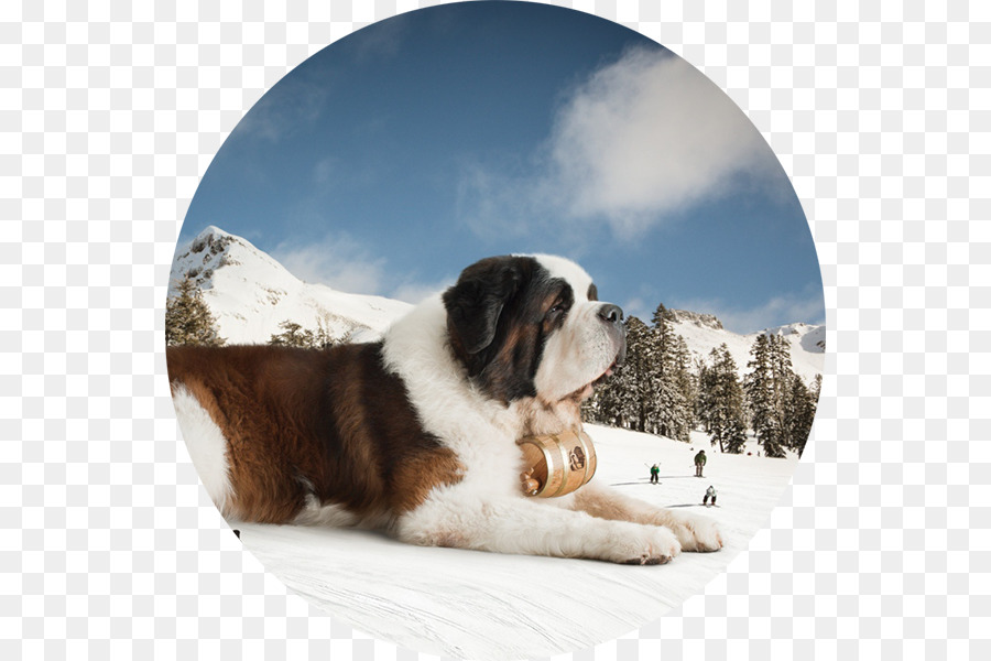 I miss you clipart with st bernard dog clip transparent library Fox Cartoon png download - 600*600 - Free Transparent St ... clip transparent library