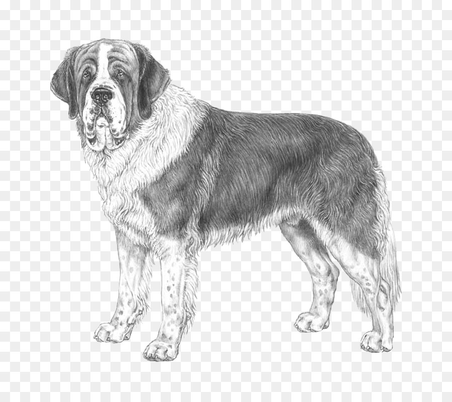 I miss you clipart with st bernard dog clipart royalty free Dog Drawing png download - 800*800 - Free Transparent St ... clipart royalty free