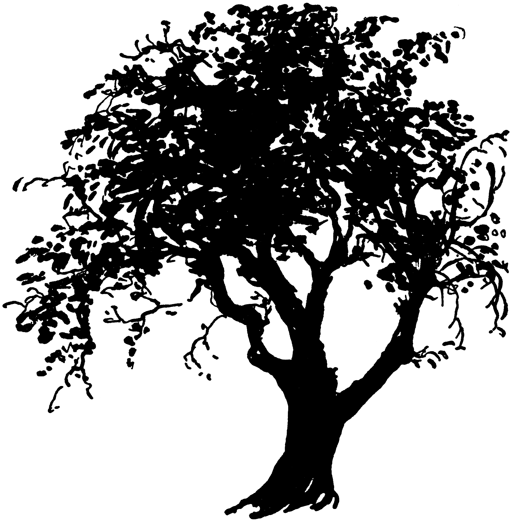 I tried it at home silhouette clipart picture black and white 32 Tree Clipart - Tree Images Free! - The Graphics Fairy picture black and white