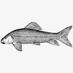 Ichthyology clipart image transparent stock Fish, Animal, Biology, Ichthyology, Zoology - Fish ... image transparent stock