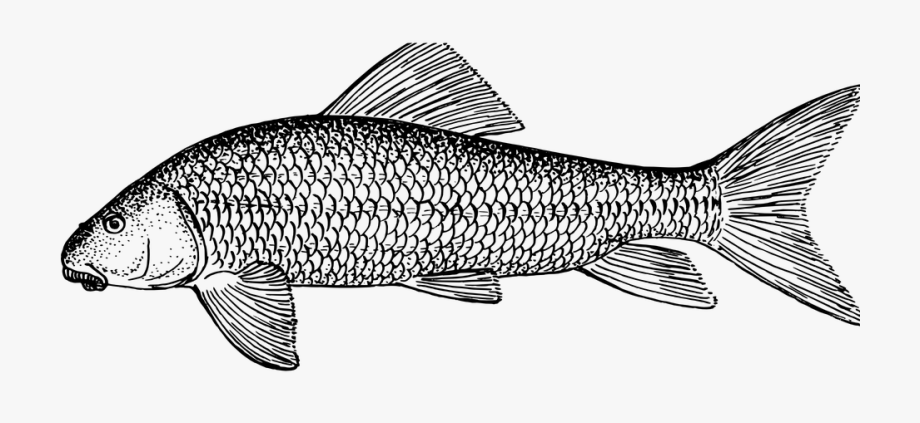 Ichthyology clipart banner library download Fish, Animal, Biology, Ichthyology, Zoology - Fish ... banner library download