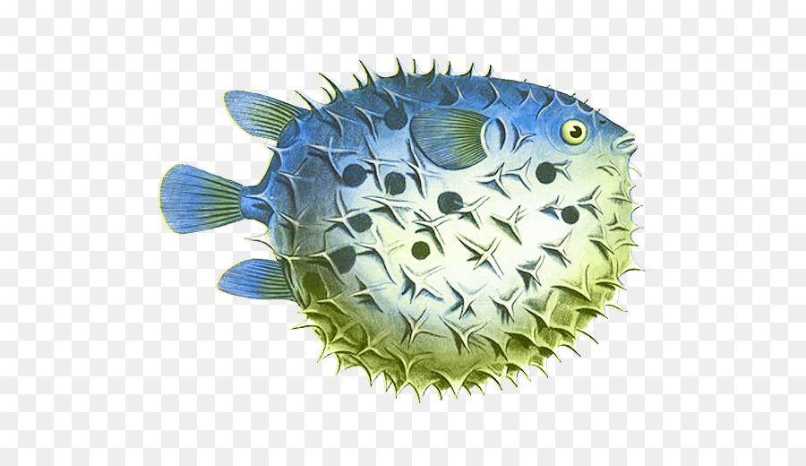 Ichthyology clipart clip royalty free library Fish Cartoon clipart - Fish, transparent clip art clip royalty free library