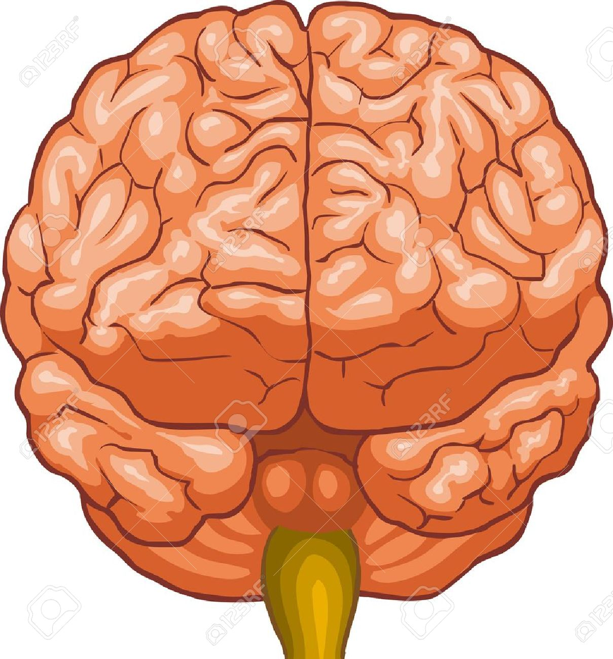 Brain front view clipart picture transparent stock Brain telepathy stock vector illustration and royalty free telepathy ... picture transparent stock