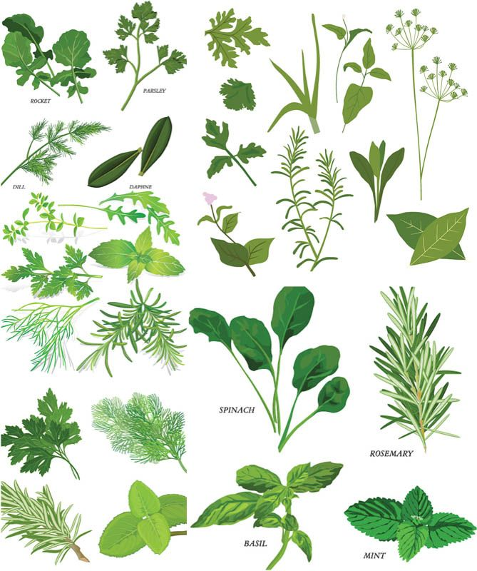 Illustration vector clipart png royalty free stock Herbs illustrations vector | Free Vector Graphic Resources | Herbs ... png royalty free stock