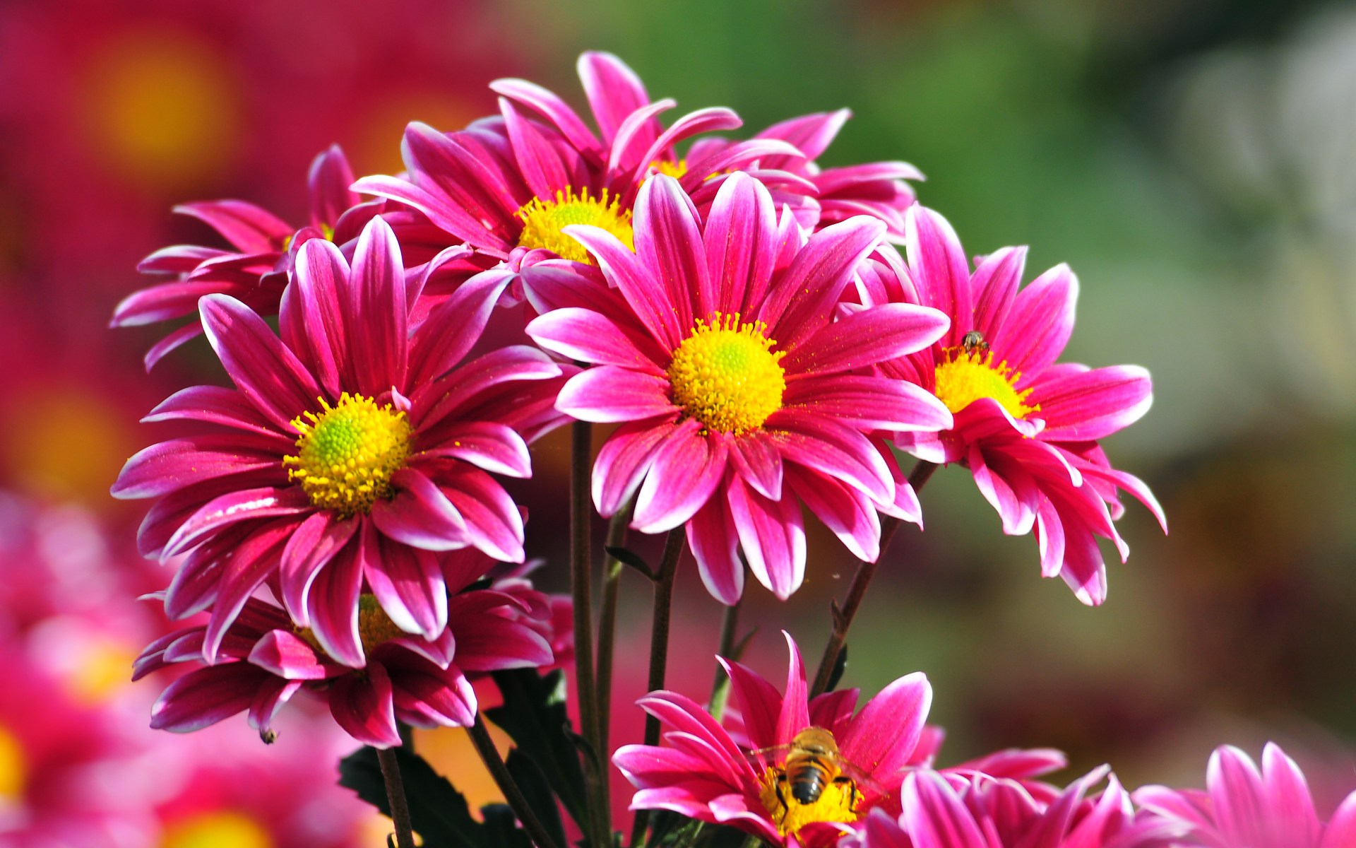 Image for flowers jpg transparent Flowers in a lot of colors and species jpg transparent