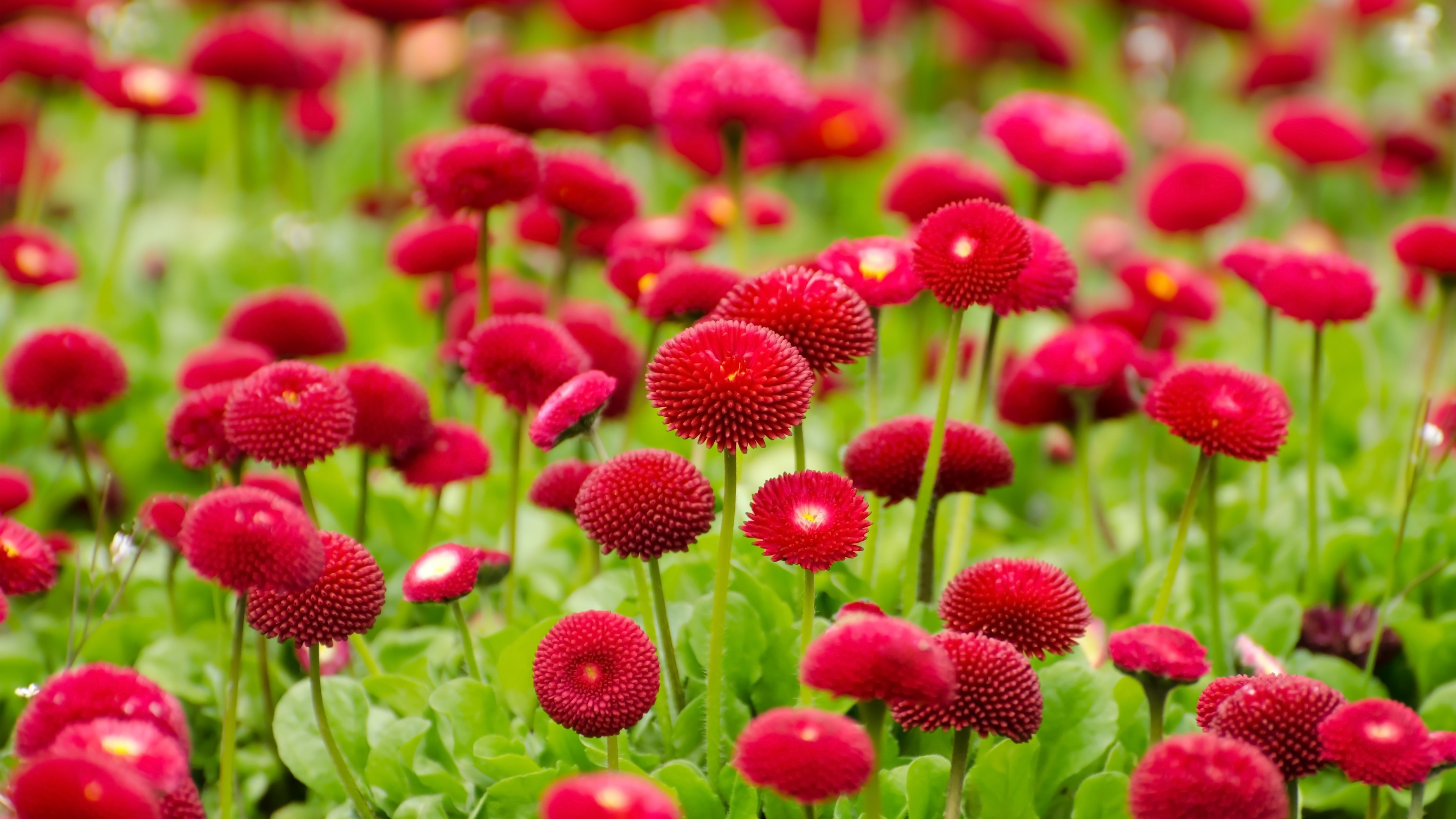 Image for flowers vector freeuse Red flowers wallpaper wallpapers for free download about (3,596 ... vector freeuse