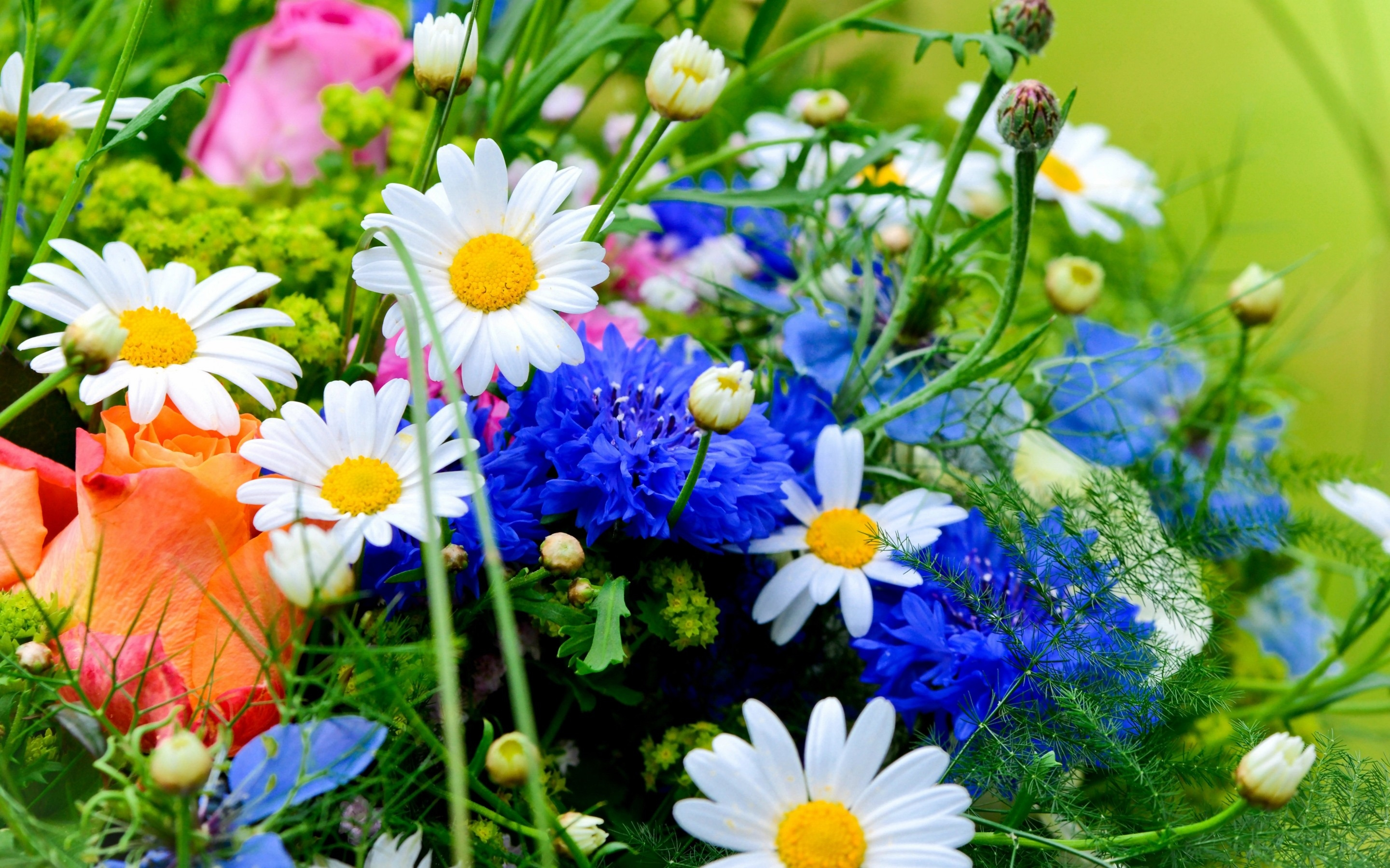 Image for flowers picture library download flowers wallpapers hd free download | Things Terry likes ... picture library download