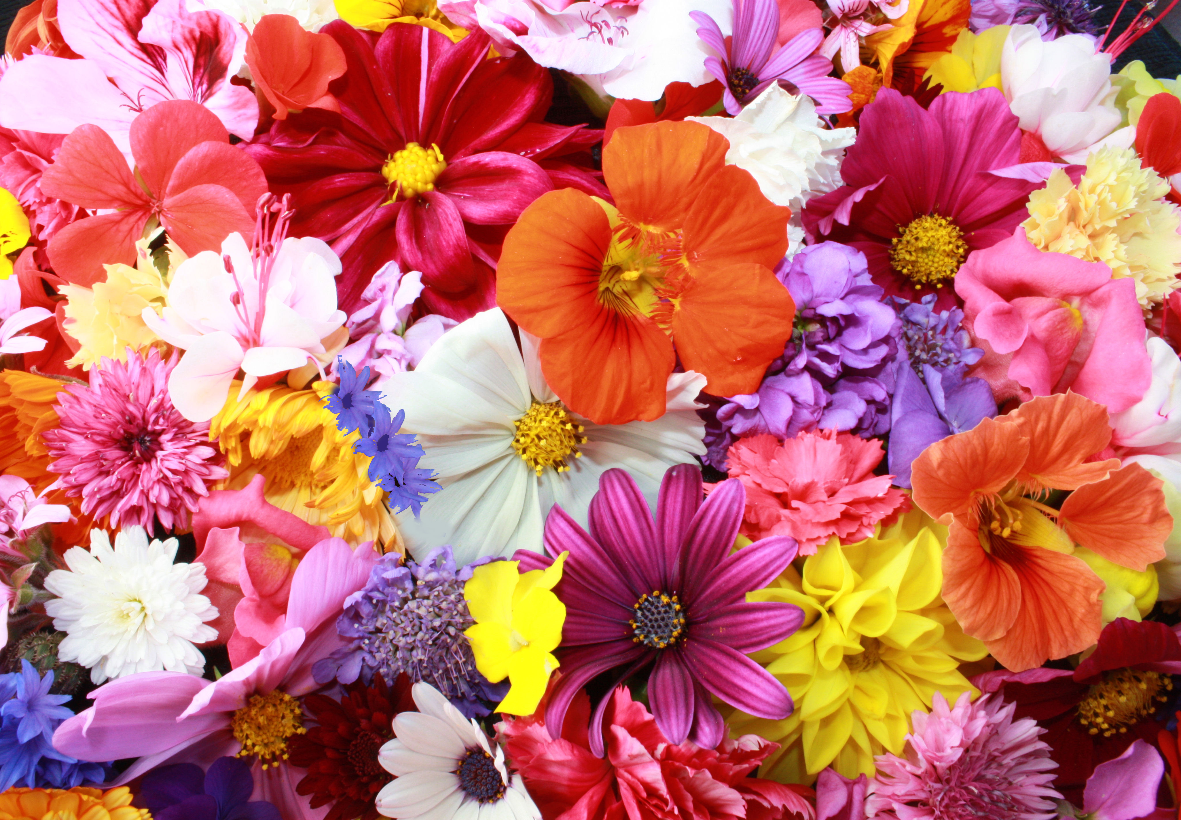 Image for flowers banner free download 17 Best images about Flowers | Mixed Colours on Pinterest | Dating ... banner free download