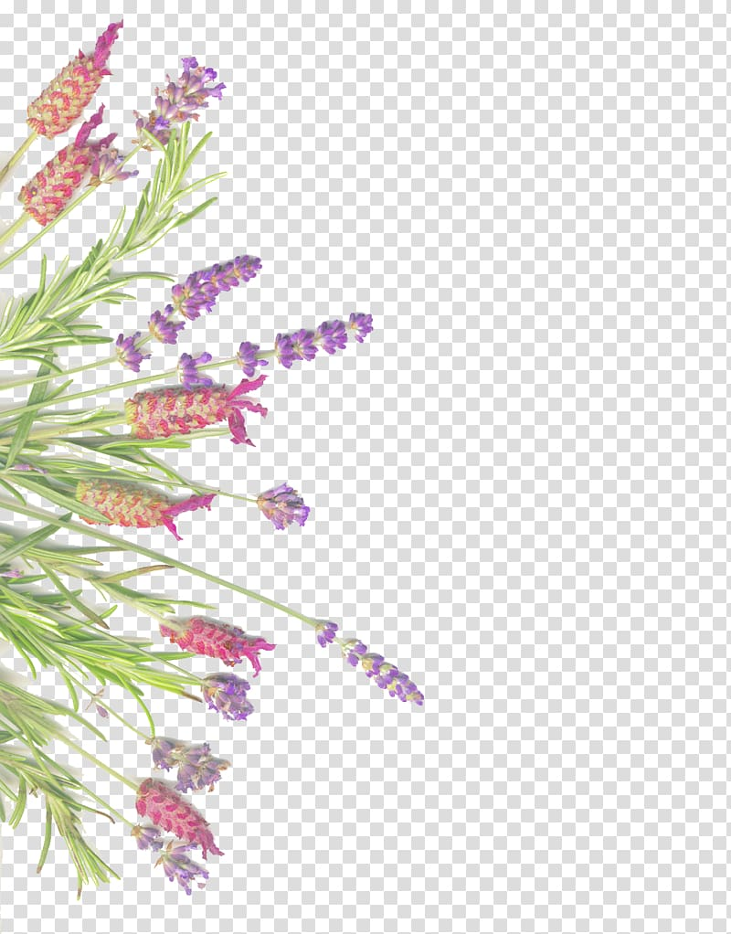 Image result for teal sage pink flowers clipart graphic free library Purple lavender flower , Lavender Herb Rosemary Common sage ... graphic free library