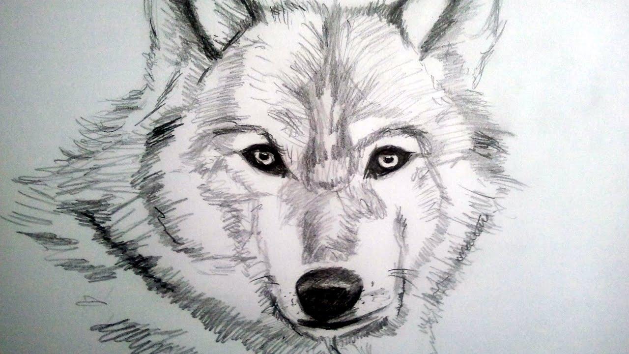Imagenes de dibujos a lapiz clip art library Como dibujar un lobo a lapiz, paso a paso: Como dibujar animales ... clip art library