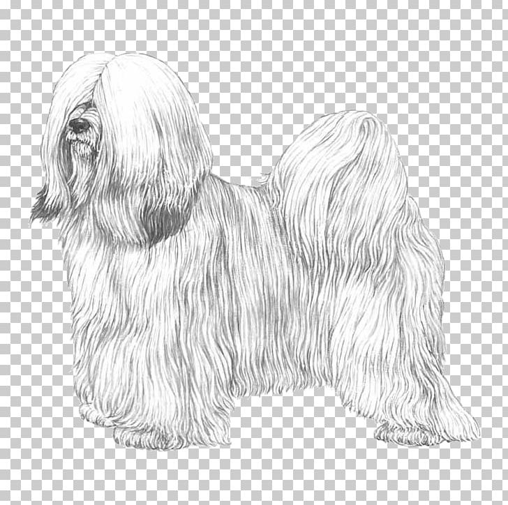 Images clipart black and white lhasa apso dog vector black and white stock Havanese Dog Tibetan Terrier Lhasa Apso Maltese Dog Skye Terrier PNG ... vector black and white stock