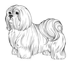 Images clipart black and white lhasa apso dog image free stock shih tzu clip art black and white - Yahoo Image Search Results ... image free stock