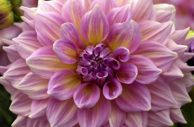 Images of big flowers clip art freeuse Big flower images - ClipartFest clip art freeuse