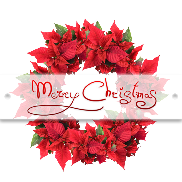 Images of christmas flowers graphic Flowers Christmas Flowers 1920x1080px – 100% Quality HD Wallpapers graphic