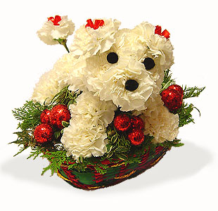 Images of christmas flowers graphic transparent stock 17 Best images about Christmas Flowers on Pinterest | Christmas ... graphic transparent stock