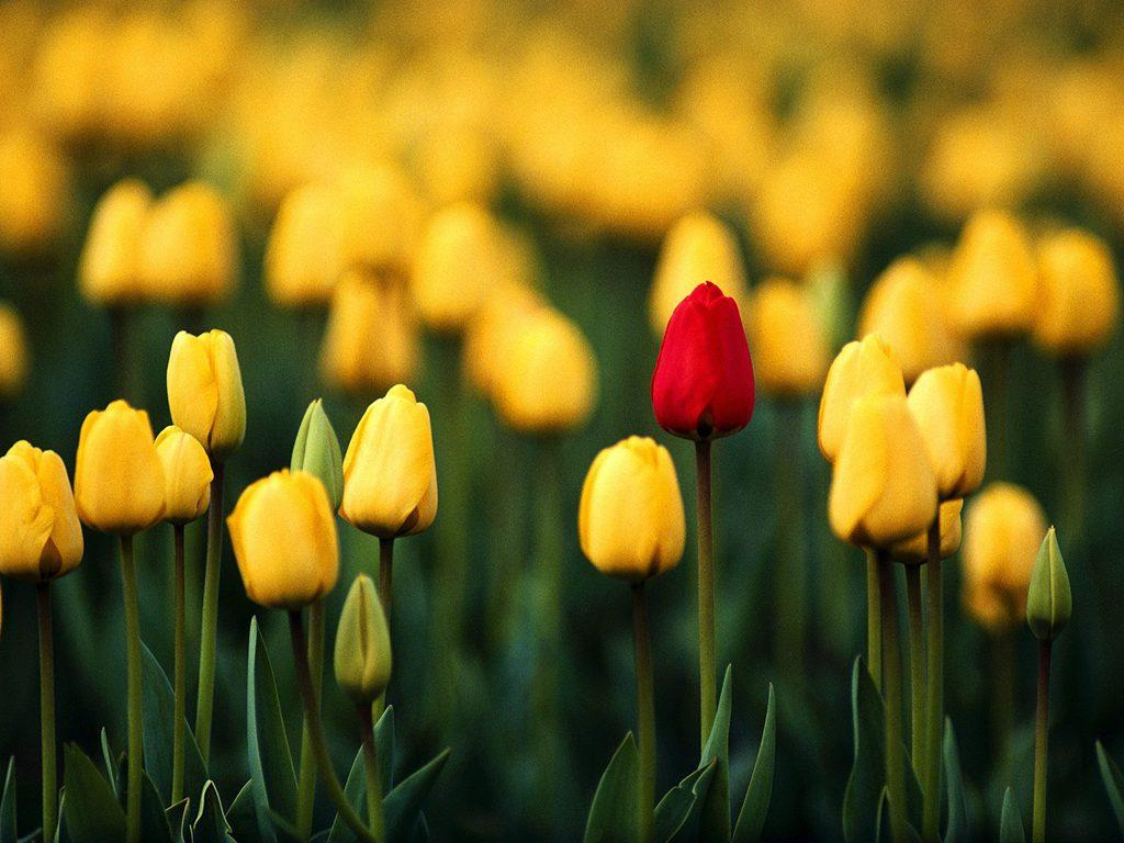 Images of flowers blooming graphic free download People Are Like Flowers: They Can Bloom Beautifully graphic free download