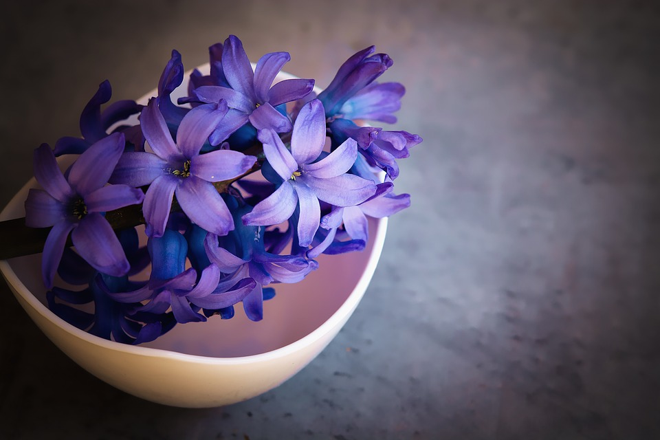 Images of violet flowers clipart library Violet - Free images on Pixabay clipart library