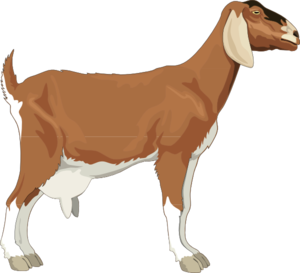 Img https i imgur com k2sl0hg clipart img graphic transparent library Female clipart goat - 153 transparent clip arts, images and pictures ... graphic transparent library