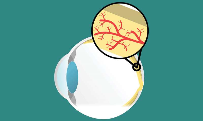 Immune cells clipart clip library Macular degeneration linked to aging immune cells clip library