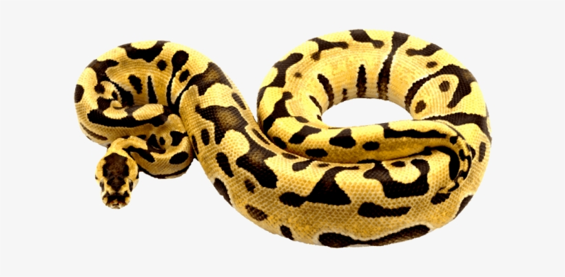 Import clipart python clip art transparent download Python Clipart Pencil And In Color Python Clipart - Python Clipart ... clip art transparent download