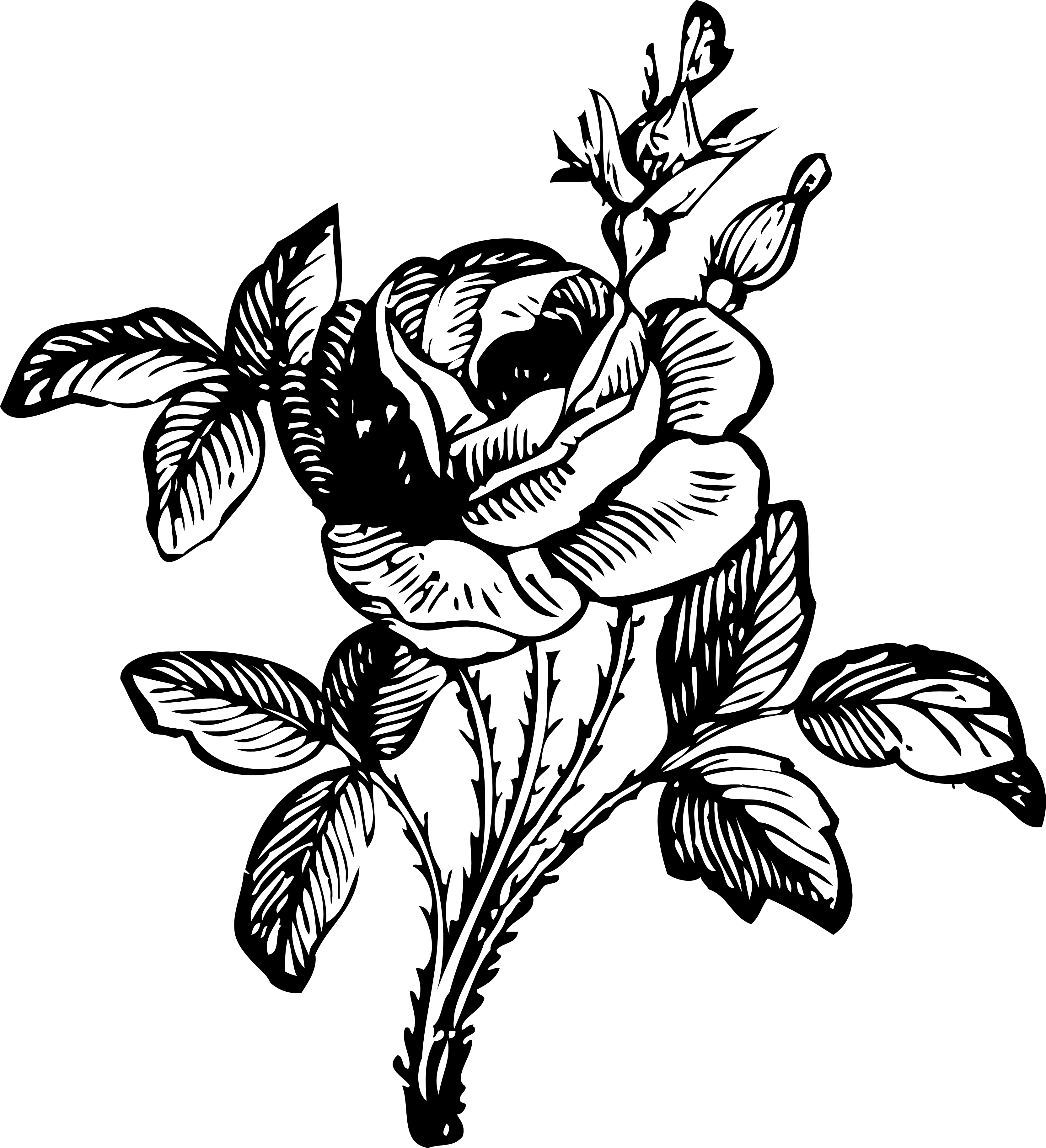 Free Line Drawing Of A Rose, Download Free Clip Art, Free Clip Art ... png royalty free library