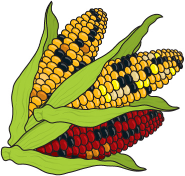 Indian corn clipart clip stock 14+ Indian Corn Clipart | ClipartLook clip stock